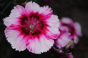 flowers for kids, childhood memories